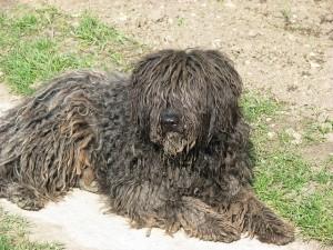 dog-697759_640